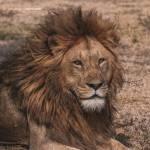 Henok Tesfaye Profile Picture