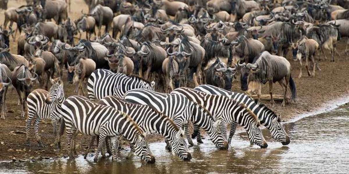All about Great Migration in Masai Mara Kenya