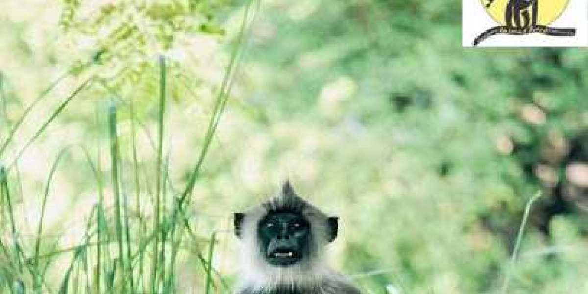 Get Rid Of Unwanted monkeys mence With These nice Tips!